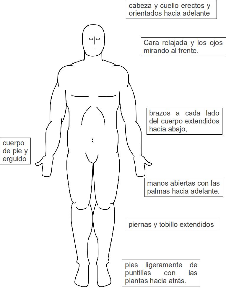 Biología: ORGANIZACIÓN GENERAL DEL CUERPO HUMANO