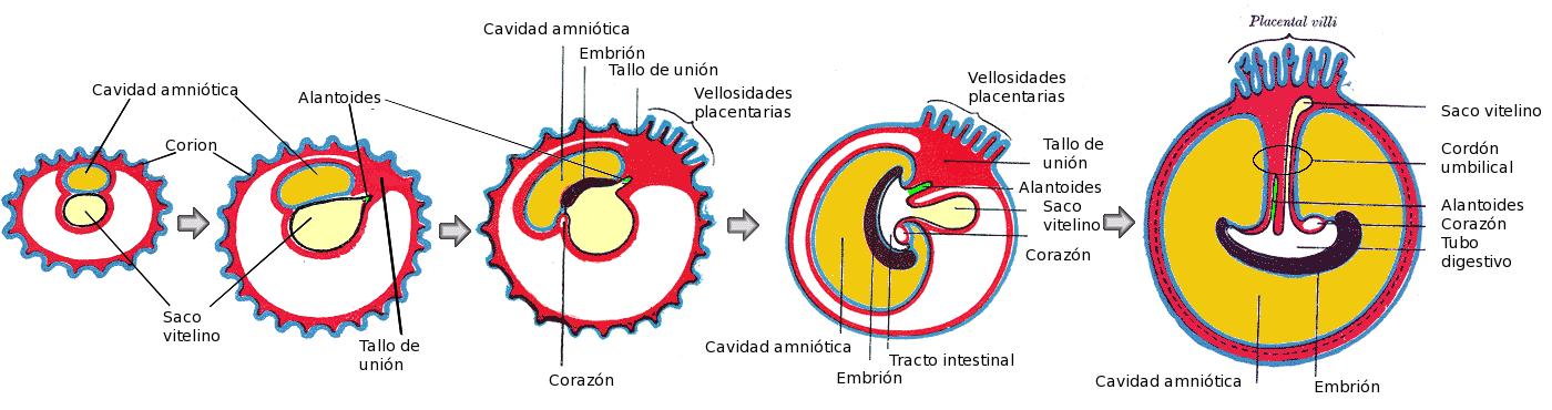 Anatomía del aparato reproductor y de la función reproductora ...